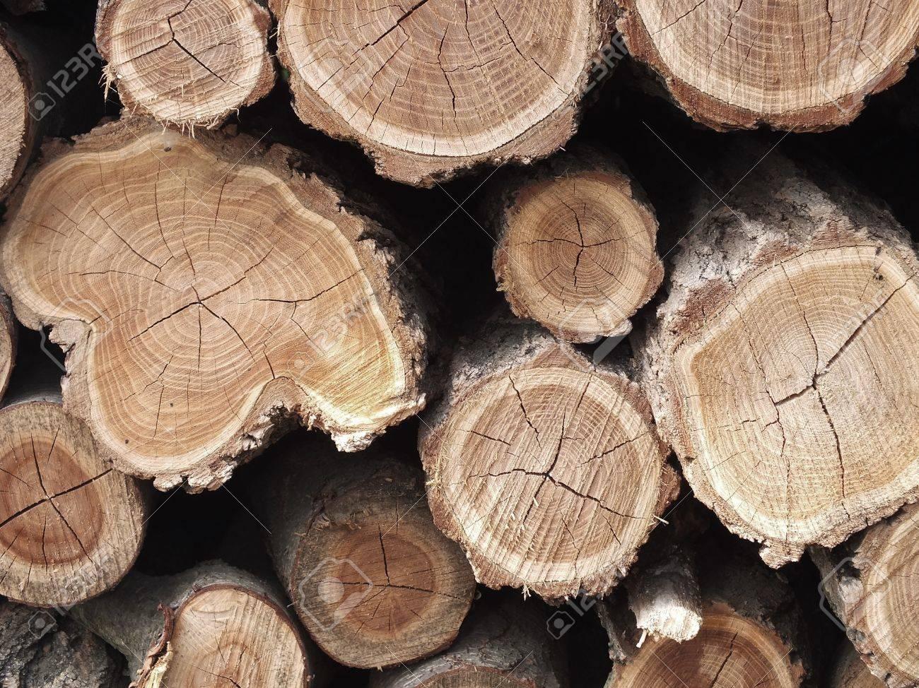 Acacia Log