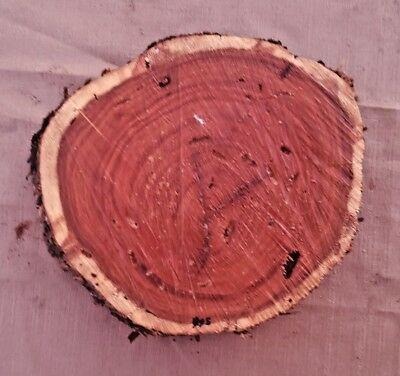 Black Walnut Log